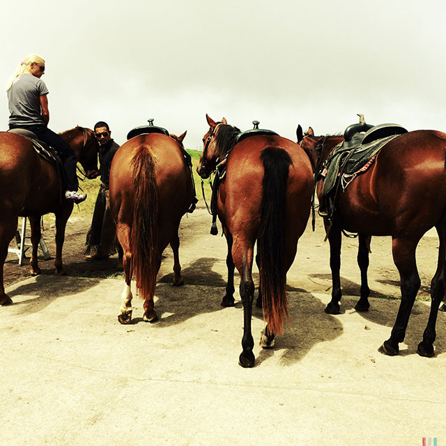 Yvonne and horses are waiting patiently for the rest of the bunch.