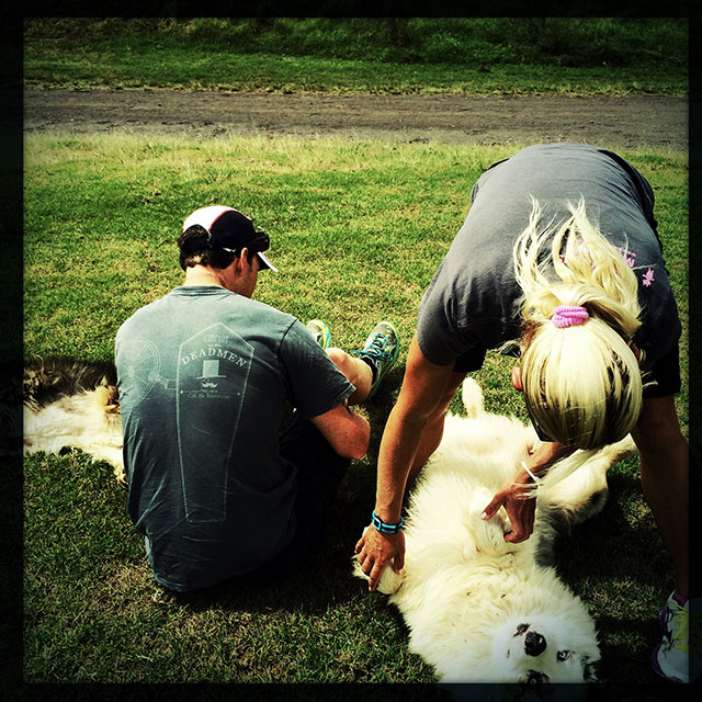 Yvonne and Ronnie enjoy cuddling the sheepdogs.