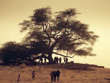 03bahrain16_treeoflife_playground desert_STILLs_008